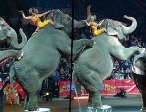 Chinese Citizens Cancel Circus Citing Abuse